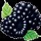 *Blackberries*