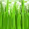 *Grass*