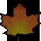 *Leaf2*