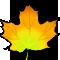 *LeafY*