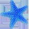 *Starfishb*