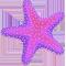 *StarfishP*