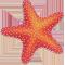 *StarfishR*