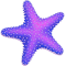 *StarfishV*