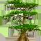 *Treecypress*